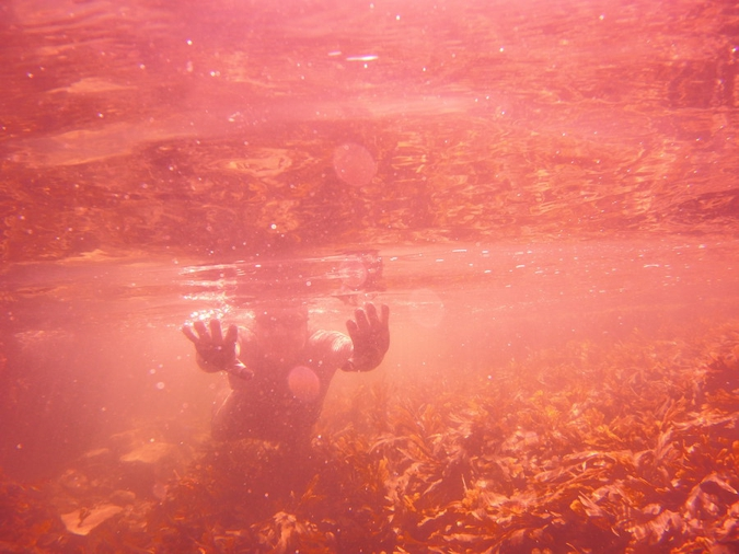 Underwater Photography With A Sealife Camera