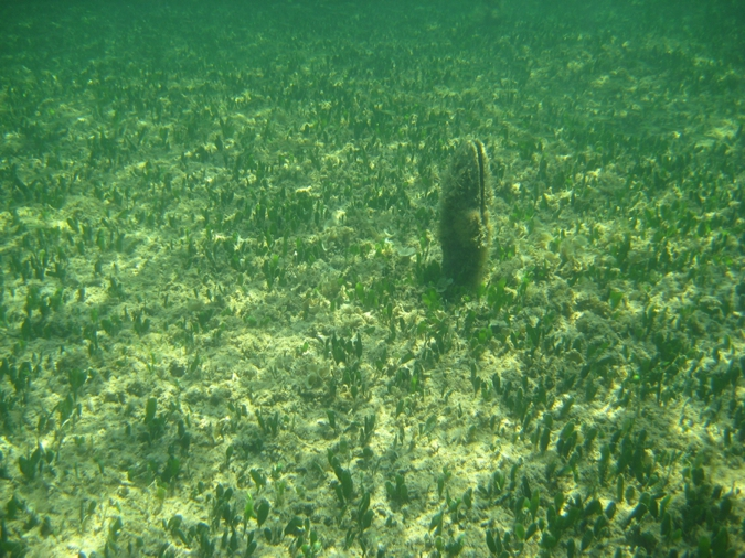 Peurto Pollenca Snorkelling