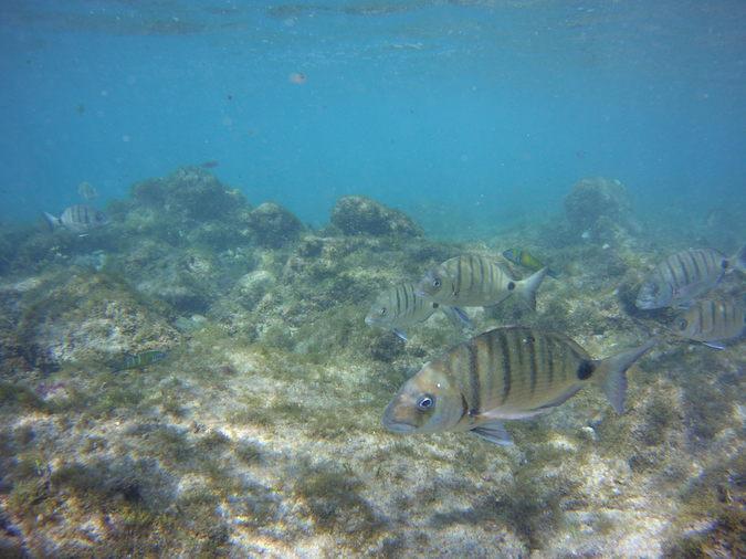 Las Palmas Snorkelling