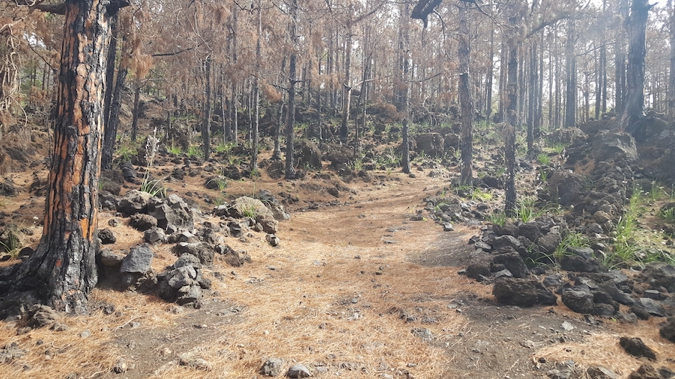 Fuencaliente To Los Llanos De Aridance Walk
